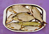 fresh fishes in the tray after fishing
