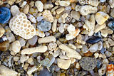 Shells and coral on a tropical beach - background