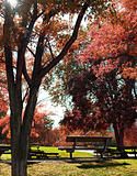 Park bench and trees