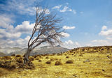 Landscape with lonely dry tree