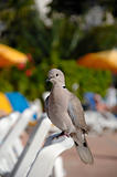 Pigeon on vacation