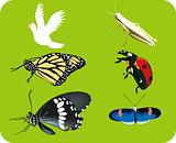 Ladybug, grasshopper,butterfly icon set