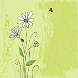 Ladybug on chamomile flower and grunge green grass background 