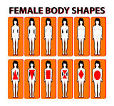 Female body shape or figure types. Woman collection. Body propor