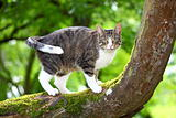 Hunting cat on a tree