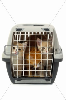 Kittens in transport box isolated on white background