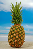 Pineapple on an exotic beach with blue and cloudy sky