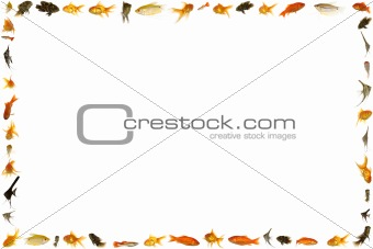Fish frame isolated on white background