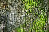 A tree bark