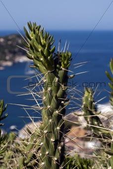 Beautiful Majorca