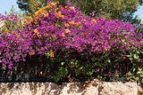 Purple and orange flowers on Majorca