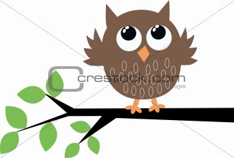 a cute little brown owl