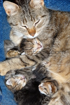 Cat with newborn kittens