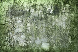 Concrete wall green with time and moisture