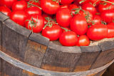 Fresh red tomatoes in a wooden bucket