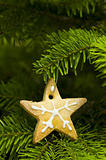 Star shape short bread cookie