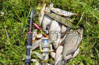 Fishing catch.