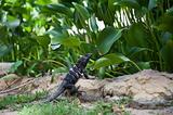 Dark Reptile
