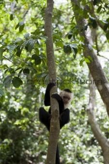 camera shy monkey