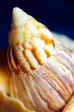 Sea shell.