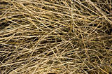 Dried grass texture.