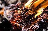Fiery pine cone.