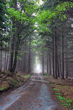 road in foggy coniferous forest