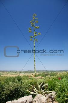 green tall plant at Girona landscape