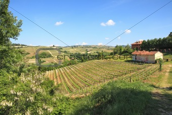 Hills and vineyards of Piedmont, northern Italy.