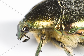 iridescent bug in close up from side