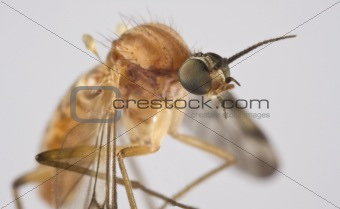 Sucking insect in close up