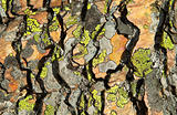 Shale and Lichen Abstract