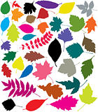 colorful silhouettes of leaves