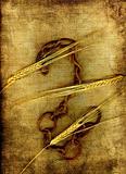 Barley and chain