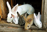 Bunny Rabbit family