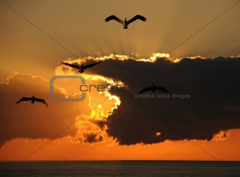 Pelicans over the ocean