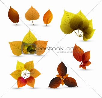 Autumn abstract leaf elements