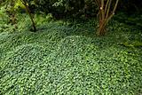 floor of plant