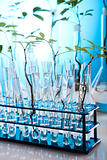 Science experiment and plants