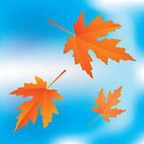 falling leaves on sky background
