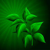 foliage illustration