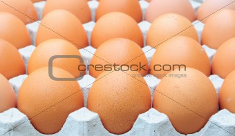 fresh organic brown eggs