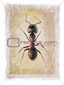 Grunge Ant