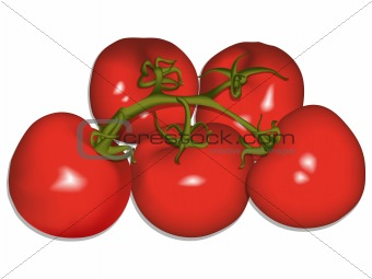 tomatoes against white