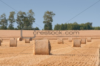 Straw rolls on farmer field in the summer