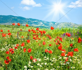 Beautiful summer mountain landscape with flowers .