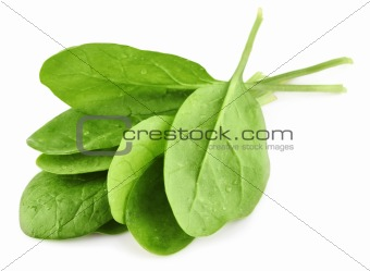 green leaves of spinach