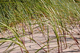dunes grass at the baltic seaside