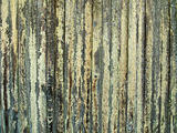 Wood Fence With Lichen