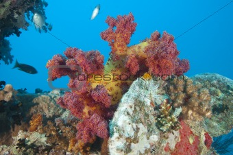 Beautiful soft coral on a shipwreck